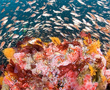 photo of coral reef and fish