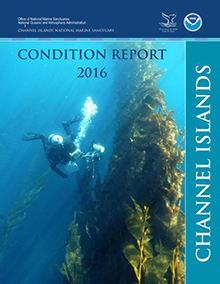 2016 Condition Report cover